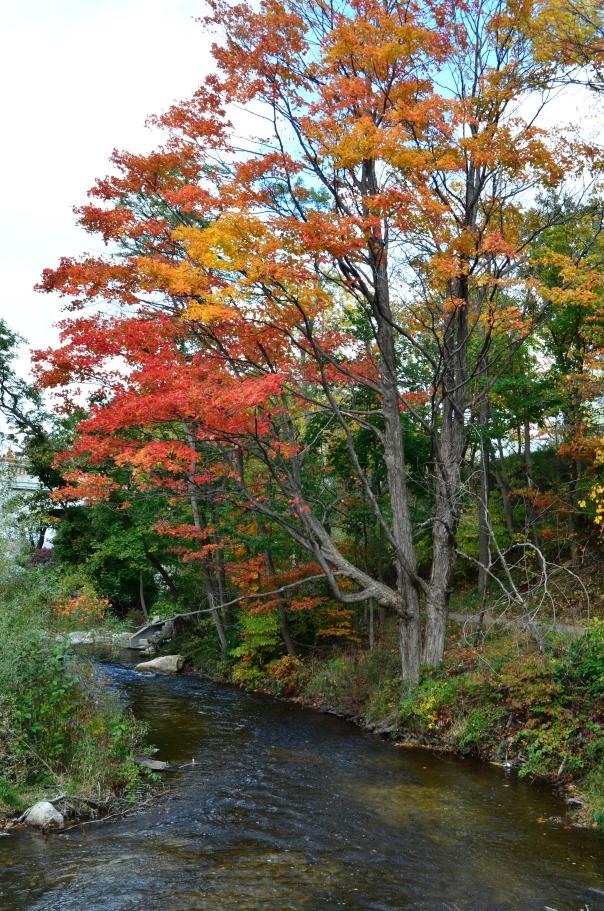 bear river trees