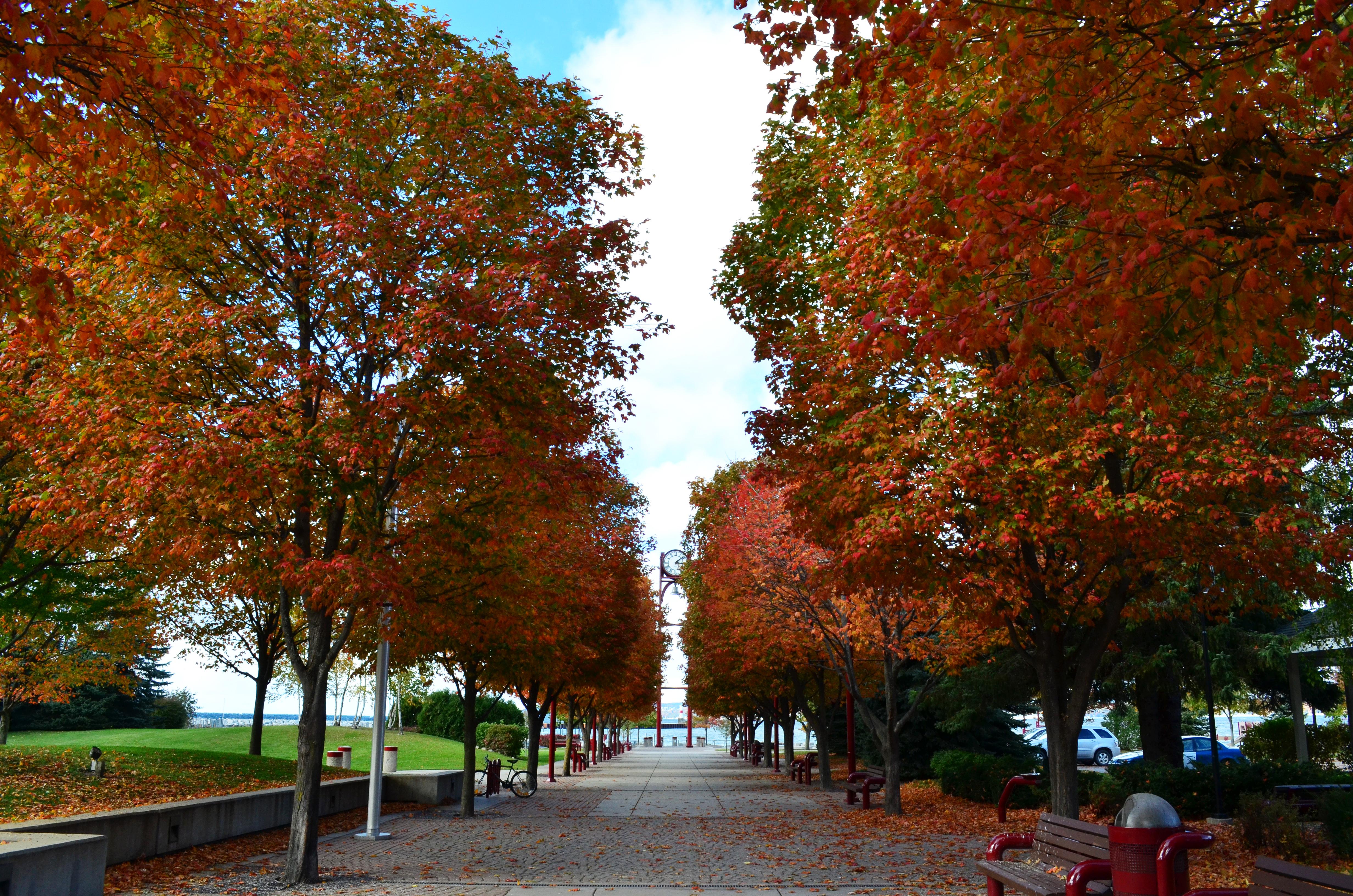 Fall Colors Harbor Springs Michigan