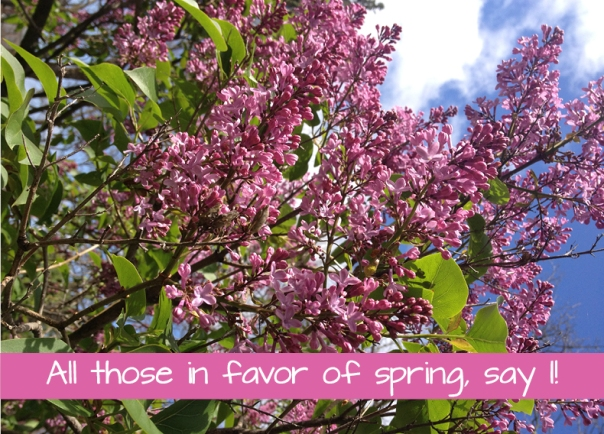 lilacs with text